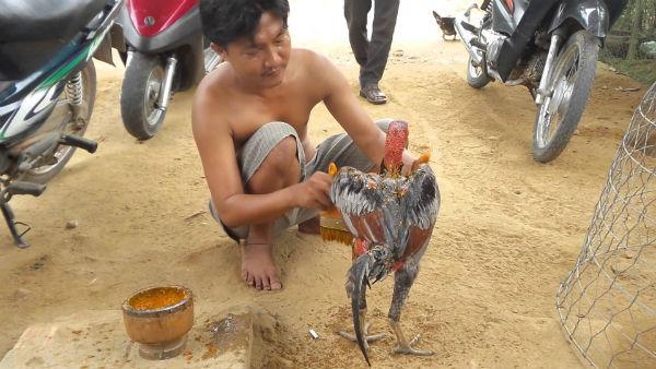 Vô nghệ cho gà